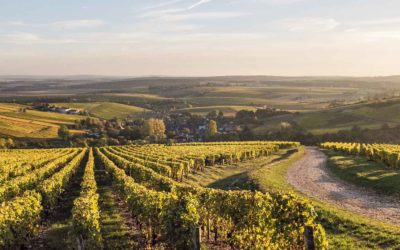 A peek into Wine Regions: Loire Valley