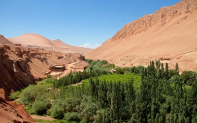 Puchang Vineyards – An Oasis in the Middle of the Desert