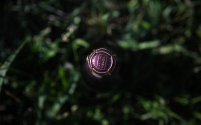 Winery Stories – Adami