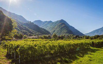 Winery Stories – La Kiuva