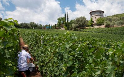 1st Growth Wine in Greece – La Tour Melas