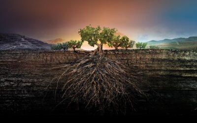 The Rebirth of Garnachas