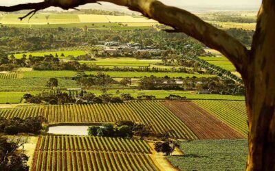 Welland – A Story of Enduring Survivor Wines in Barossa
